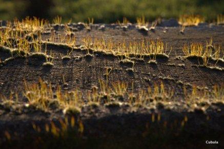 Même pour le lichen c'est bientôt le printemps